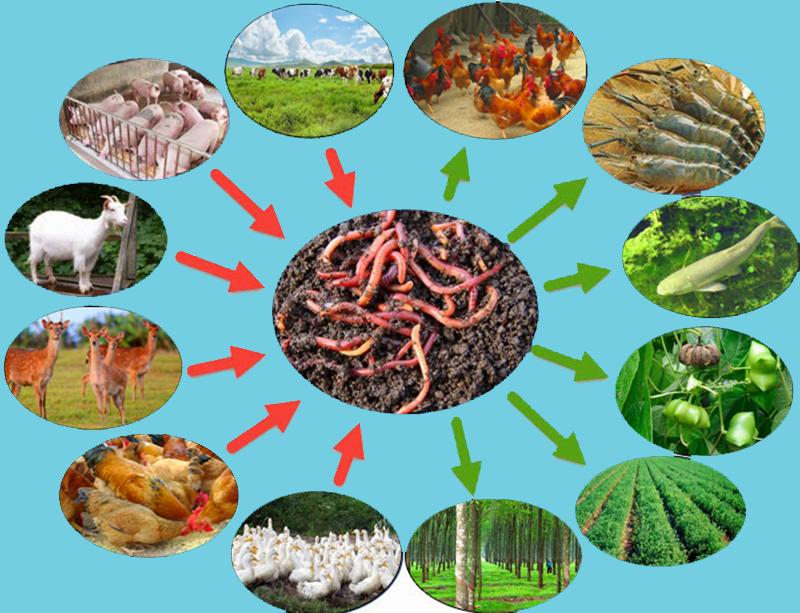giun đất trong chăn nuôi và trồng cây